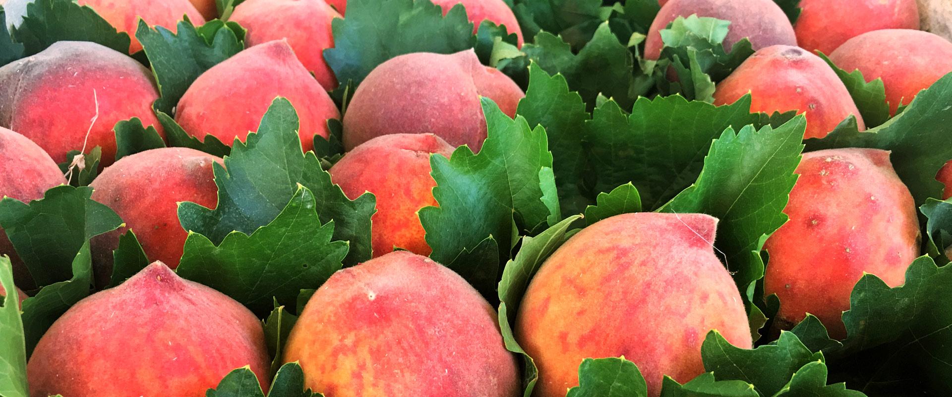 Fresh Peaches Veres Vert