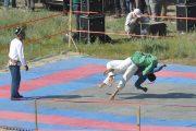 Kurash-Wrestling-Veres-Vert-com