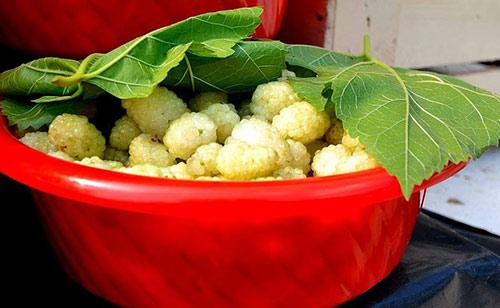 Mulberry-white-Veres-Vert-com